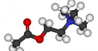 Acetylcholine (neurotransmitter): functions and characteristics