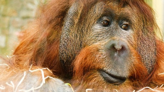 The 20 most endangered animals in the world