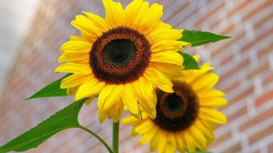 Antophobia (fear of flowers): causes