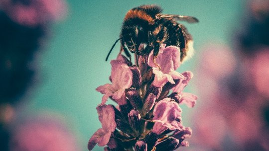 Fear of bees (apiphobia): causes