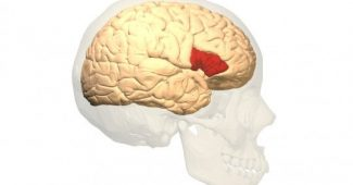 Broca's area (part of the brain): functions and their relationship to language