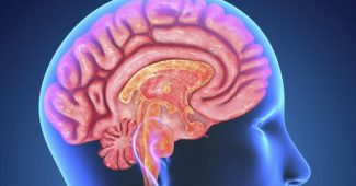 The 5 auditory areas of the brain