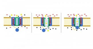 Ion channels: what they are