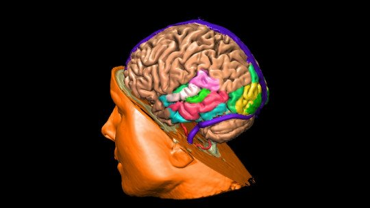 The male brain: structures and differential functionality