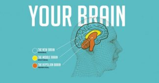 The model of the 3 brains: reptilian, limbic and neocortex