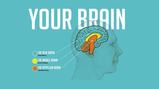 The model of the 3 brains: reptilian
