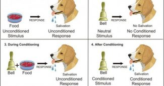 Classical conditioning and its most important experiments