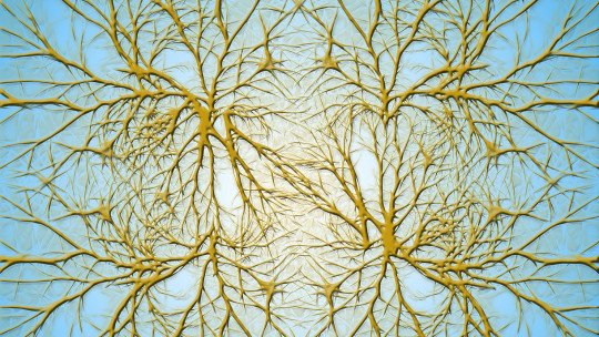 What are neuron dendrites?