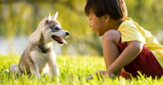 How to develop animal empathy in children