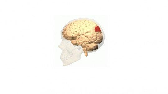 Angular rotation (brain)-associated areas