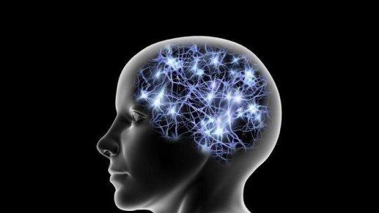 Cingulate (brain) rotation: anatomy and functions