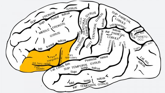 Lower Frontal Swivel of the Brain: Features and Functions