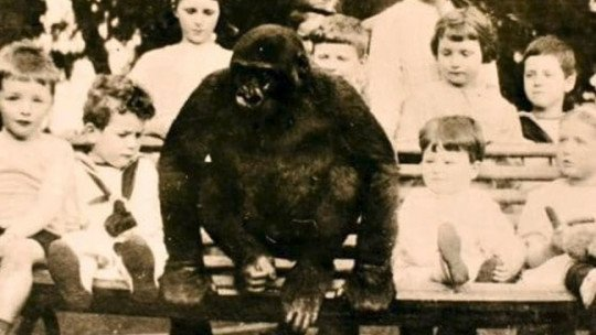 The incredible case of the gorilla who was raised as just another child