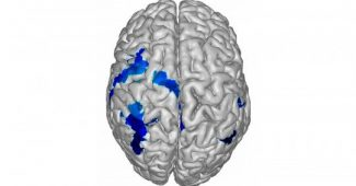 Left cerebral hemisphere: parts, characteristics and functions