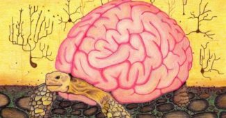 """Heuristics"": the mental shortcuts of human thought"