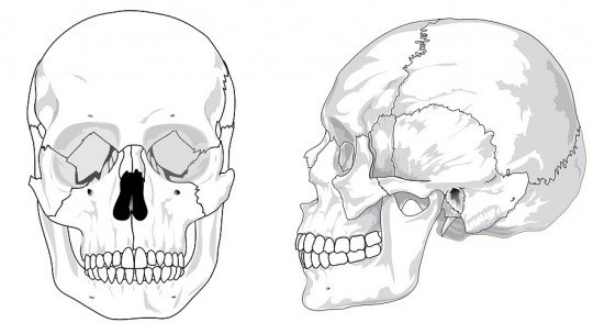 Bones of the head (skull): how many are there and what are they called?