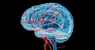 The blood supply of the brain: anatomy, phases and route