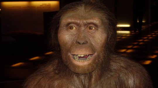 Lucy the Australopithecus: this was the fossil that changed everything