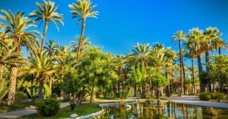 Top 10 child psychologists in Elche