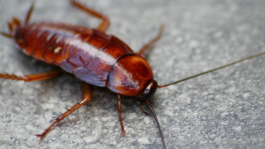Fear of cockroaches (blatophobia): causes