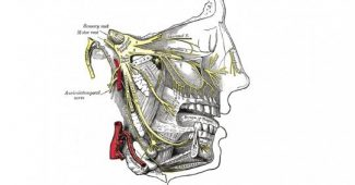 Trigeminal Neuralgia-Symptoms, Causes, Diagnosis, and Treatment