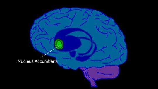 Nucleus accumbens: anatomy and function