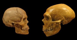 Is our species more intelligent than the Neanderthals?