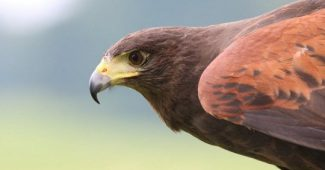 Ornithophobia (fear of birds): symptoms and causes