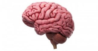 What are the folds of the brain for?