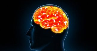 Personality may be regulated by the immune system