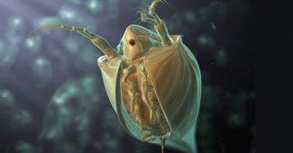 Flea Bites: Symptoms, Treatments, and Risks