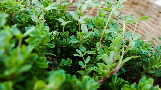 The 50 best medicinal plants