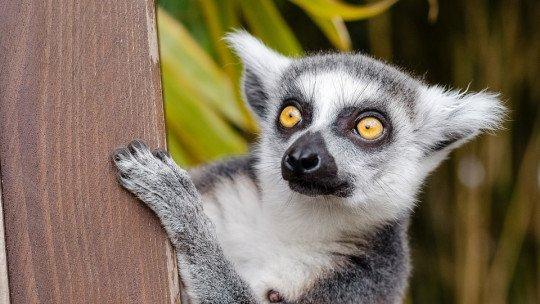 Comparative Psychology: the animal part of psychology