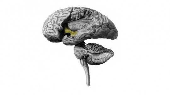 Psychopathy: what goes on in the psychopath's mind?