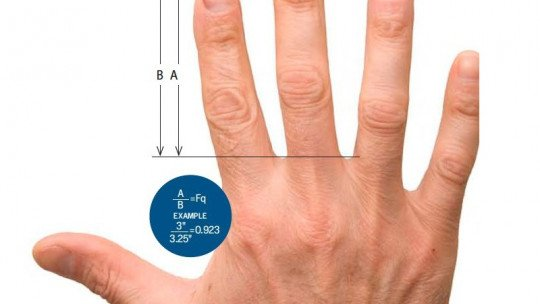 The length of the fingers would indicate the risk of schizophrenia
