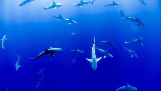 Selacaphobia (fear of sharks)-symptoms