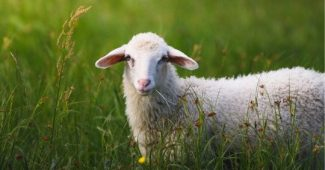 Domestication syndrome: what it is and how it expresses itself in animals