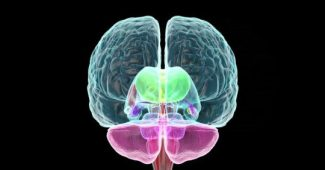 Limbic system: the emotional part of the brain