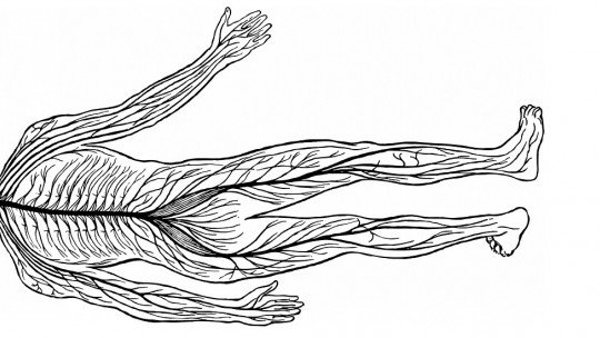 Peripheral nervous system (autonomic and somatic): parts and functions