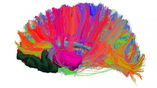 The brain's reward system: what is it and how does it work?