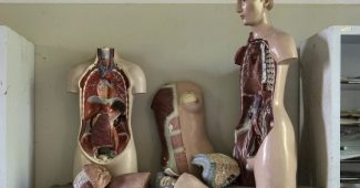 The 12 systems of the human body (and how they work)