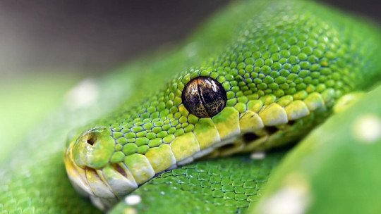 Dreaming of snakes: what does it mean?