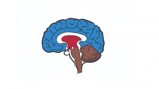 MacLean's theory of the triune brain: what it is and what it proposes