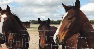 Therapy with horses: an alternative therapeutic resource