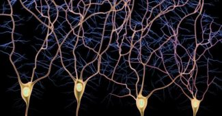 Afferent and efferent pathways: the types of nerve fibers